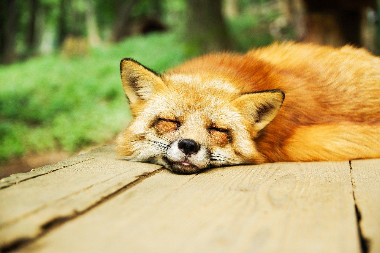 寝るときは何も考えない